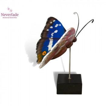 vlinder-mini-urn-weerschijn-blauw-bruin-wit-oranje-zijkant-met-blokje_nf-4059_memento-aan-jou